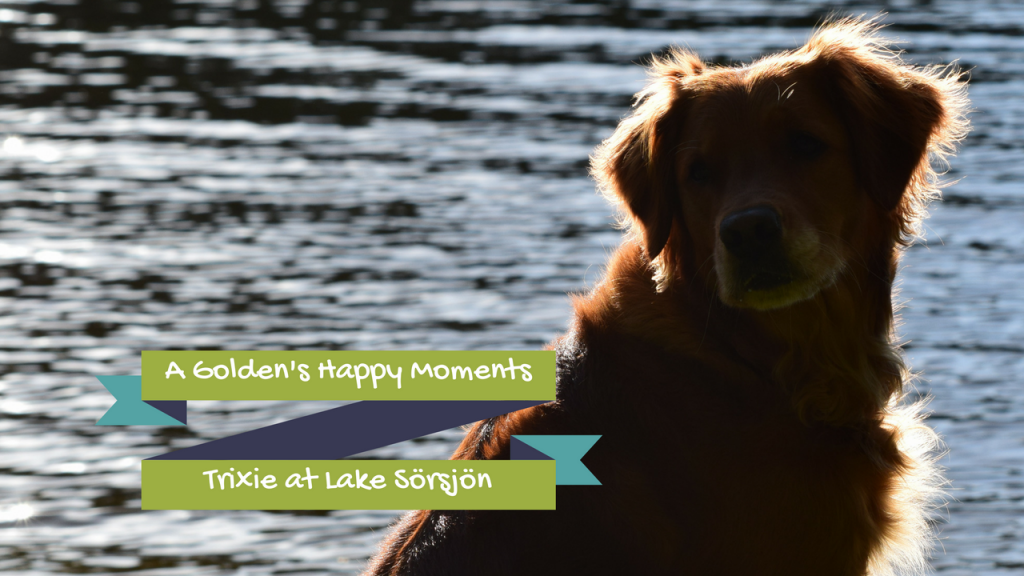 A Golden's Happy Moments - Trixie at Lake Sörsjön - The Biveros Effect